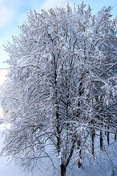 Matt Create - A Snowy Dreamscape