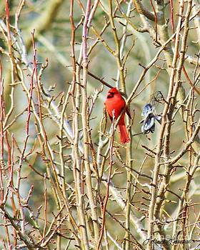 A Spot of Red by Lorraine Louwerse