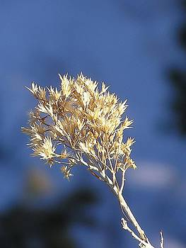 FeVa  Fotos - A Winter Weed