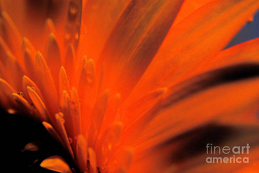 Ablaze by Wendy Riley- Athans