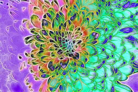 Cindy Boyd - Abstract Peacock Chrysanthemum Flower