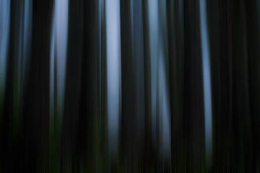 Matt Dobson - Abstract Trees and Fog