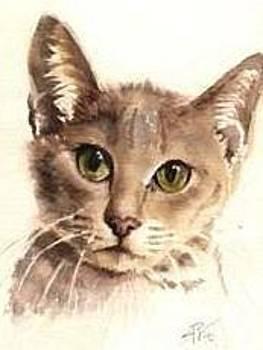 Abyssinian Cat by Sandra Phryce-Jones