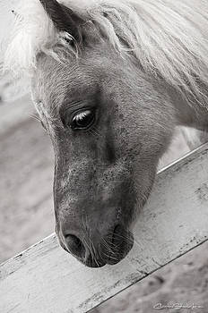 Adorable by Christine Stonebridge