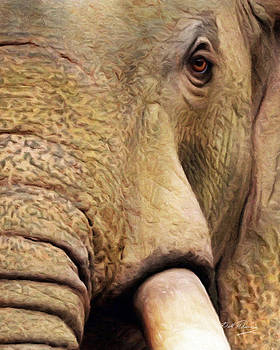 African Elephant by Bill Fleming