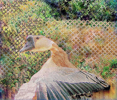 YoMamaBird Rhonda - African Goose