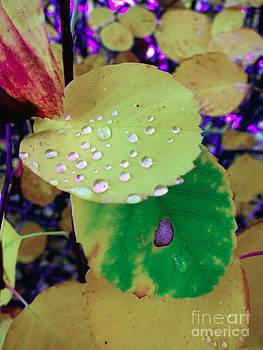 After Rain by Michelle Bergersen