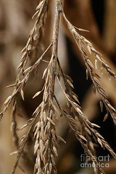 Linda Knorr Shafer - After The Harvest - 1