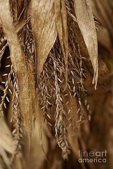 Linda Knorr Shafer - After The Harvest - 2
