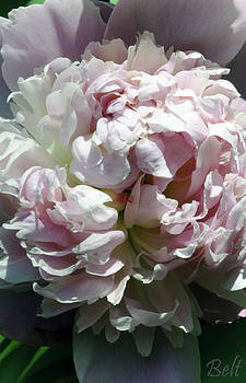 Christine Belt - Afternoon Visit With Peony