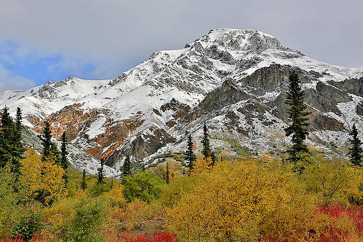 Alaska Fall Colors on Sheep Mountain by Sam Amato