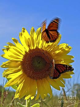 Brenda Giasson - All a Flutter