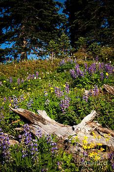 Alpine Wildflower Meadow by Karen Lee Ensley