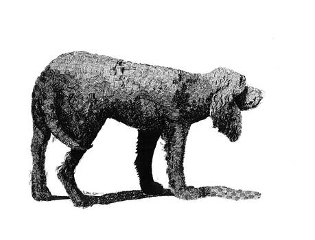 American Water Spaniel  by A Leon Miler
