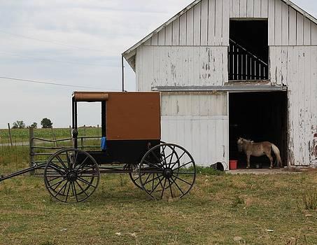 Amish Pony Barn by Donna Bosela