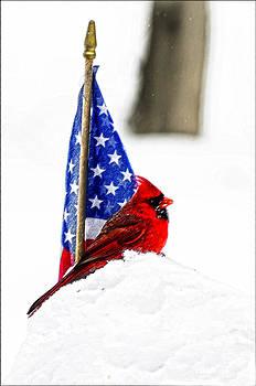 Randall Branham - An American Bird