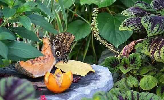 An eye for fruit by Salomi Prakash