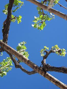 Andalucia vines by Jennifer Watson