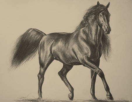 Andalusian Beauty by Paula Collewijn -  The Art of Horses
