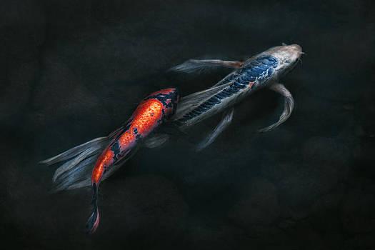 Mike Savad - Animal - Fish - Beauty and Grace