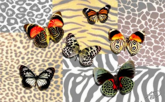 Animal Print by Lauranns Etab