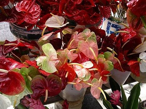 Anthuriums by Monica Cranswick