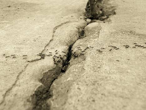 Ants and the Concrete Canyon by Floyd Smith