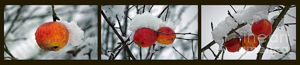 Gwyn Newcombe - Apples 1 2 3