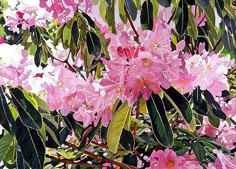 David Lloyd Glover - Arboretum Rhododendrons