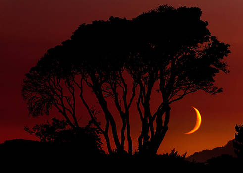 Matt Dobson - Arbutus Sunset