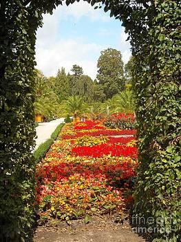 Arch Garden by Liliana Ducoure
