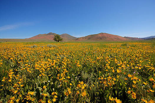 Arco Flower Field by Rick Otto