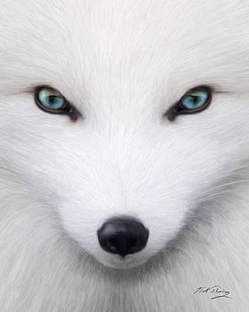 Arctic Fox by Bill Fleming