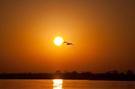 Karol  Livote - As the Gull Glides