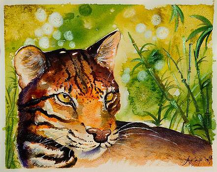 Asian Golden Cat by Sydney Gregory