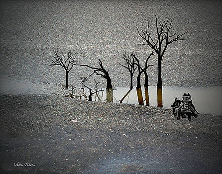 Sabine Stetson - Asphalt Oasis