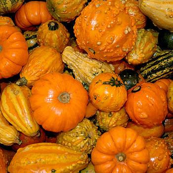 LeeAnn McLaneGoetz McLaneGoetzStudioLLCcom - Assorted Gourds