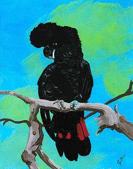 Australian Black Red Tailed Cockatoo by Gloria Dietz-Kiebron