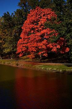Autum Color by Jeffrey Swank