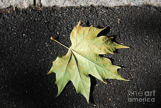 Autumn 10 by Elena Mussi
