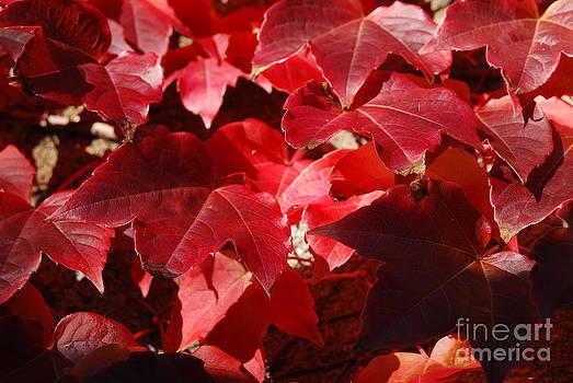 Autumn 11 by Elena Mussi