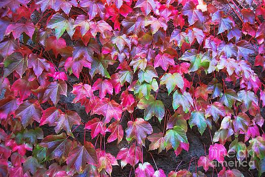 Autumn 12 by Elena Mussi