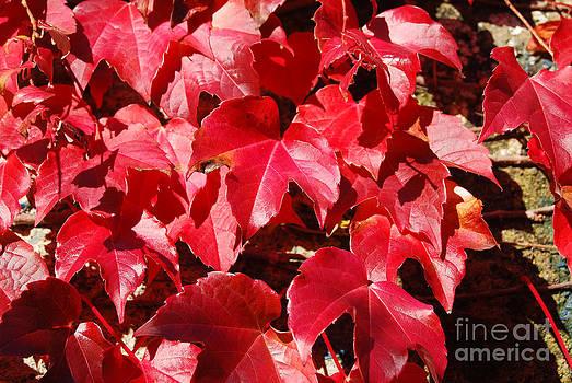 Autumn 13 by Elena Mussi