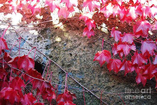 Autumn 16 by Elena Mussi