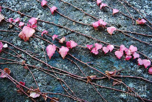 Autumn 18 by Elena Mussi