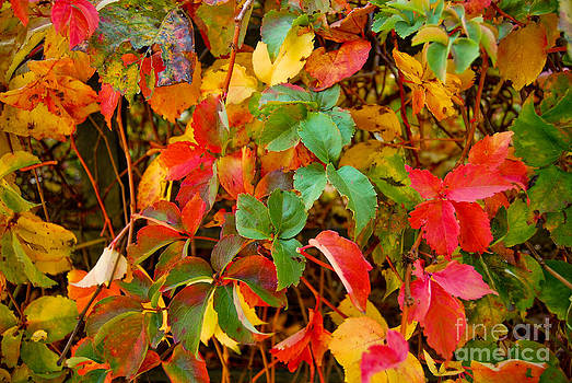 Autumn 3 by Elena Mussi