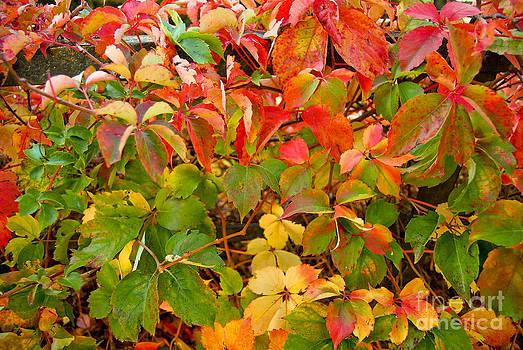Autumn 4 by Elena Mussi