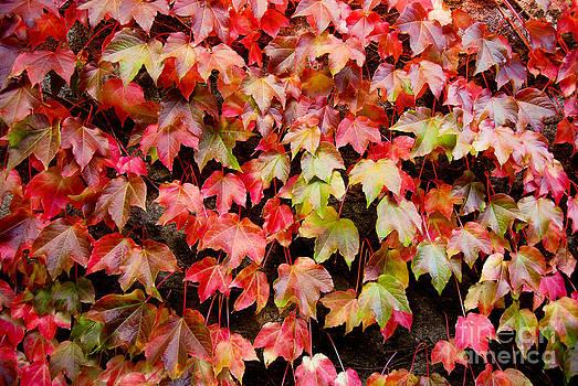 Autumn 5 by Elena Mussi