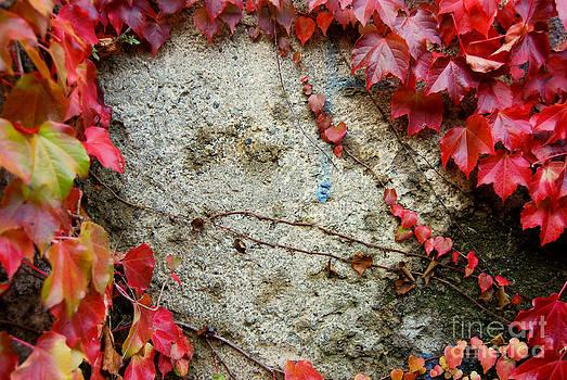 Autumn 6 by Elena Mussi