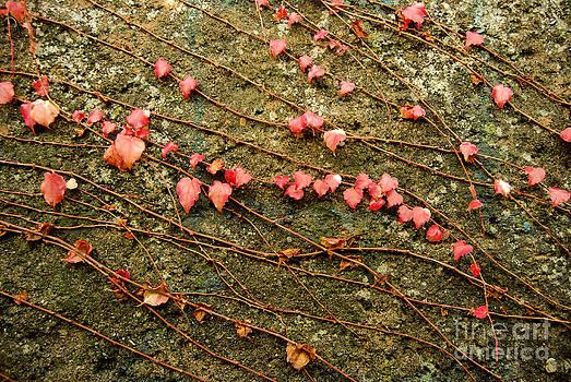 Autumn 7 by Elena Mussi
